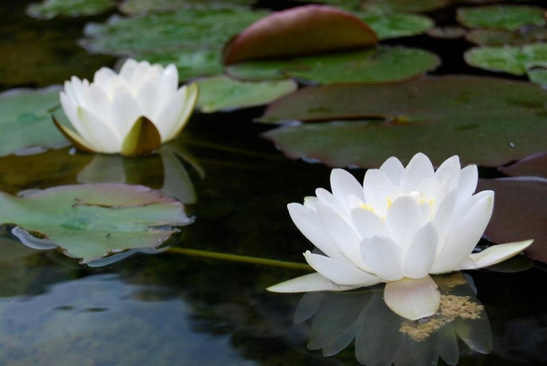 La importancia de cultivar el autoconocimiento